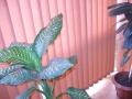 Jaluzele verticale textile 6
